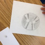 Student observational drawing of a button